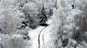 Обои Зимний лес: Зима, Снег, Дорога, Деревья, Обои, Зима