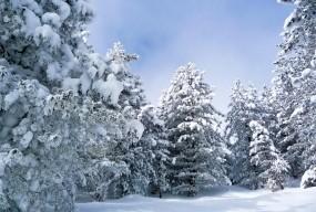 Обои Зима в лесу: Зима, Снег, Лес, Зима