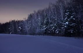 Обои Ночь в зимнем лесу: Зима, Снег, Лес, Ночь, Зима
