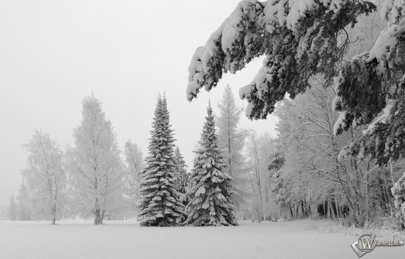 Зимний пейзаж 1600x1024