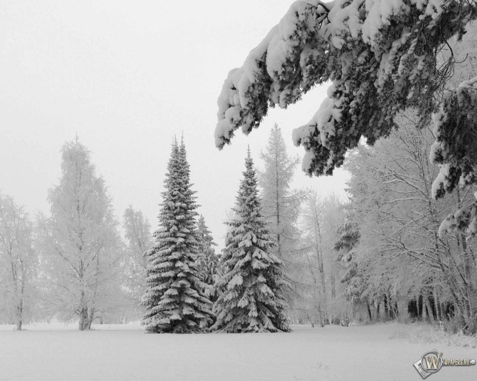 Обои зимний пейзаж на рабочий стол с