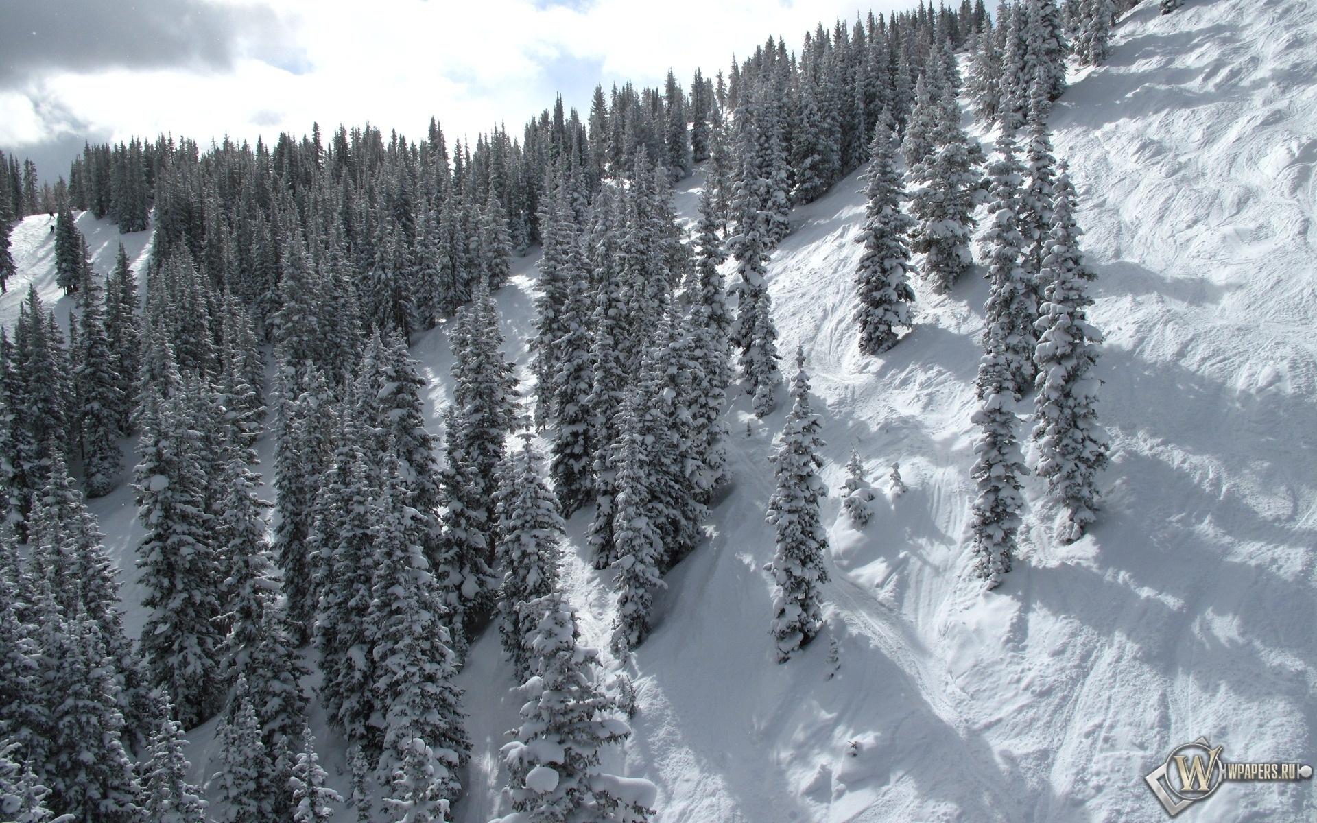 Зимний лес на склоне 1920x1200
