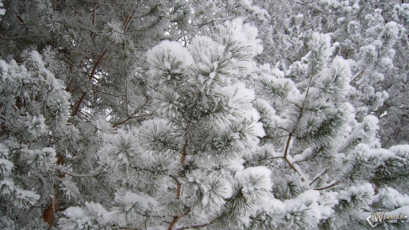 Картинки на рабочий стол 1280х1024 природа зима