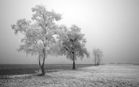 Обои Заснеженные деревья: Зима, Дорога, Деревья, Зима