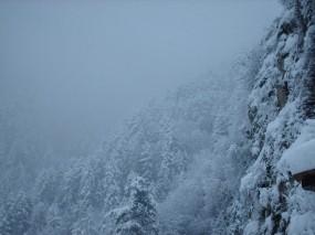 Обои Метель: Зима, Снег, Лес, Деревья, Зима