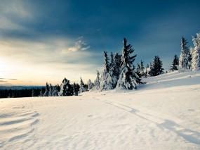 Обои Русская зима: Зима, Снег, Елки, Зима