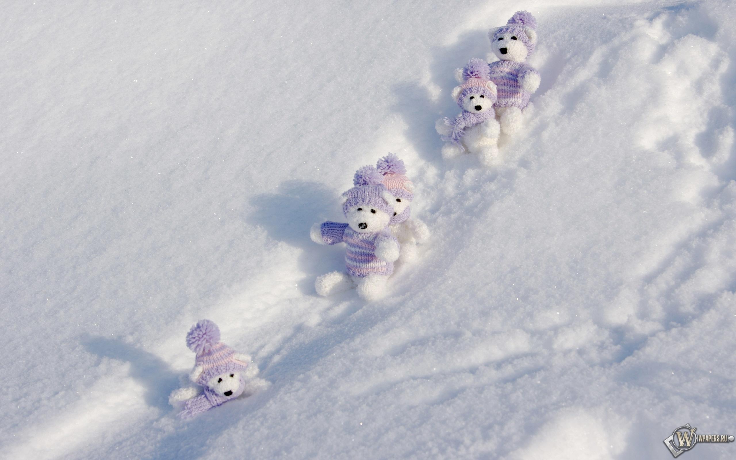 Мишки на снегу 2560x1600