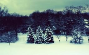 Обои Зимний полдень: Зима, Лес, Елки, Зима