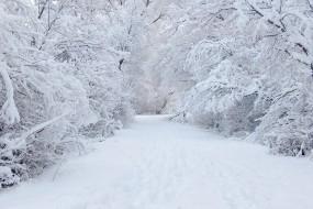 Обои Зима: Зима, Снег, Дорога, Зима
