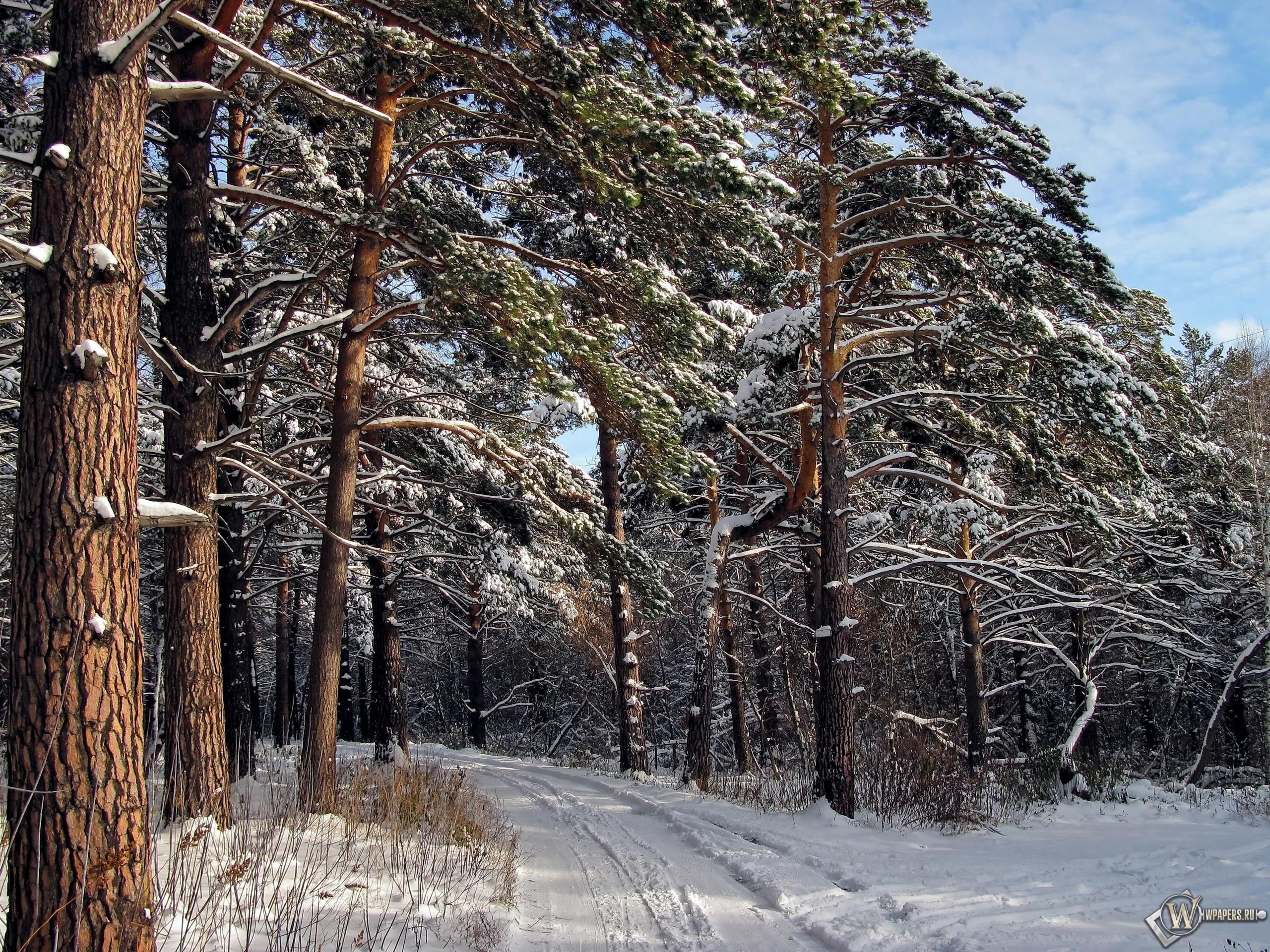 Зимний лес  2560x1920