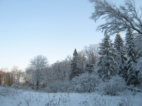 Обои Красавица зима: Зима, Снег, Деревья, Зима