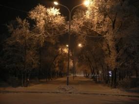 Обои Зимняя аллея: Зима, Снег, Деревья, Зима