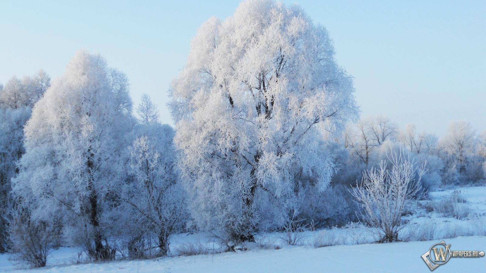 Зима природа утро 1600x900 картинки