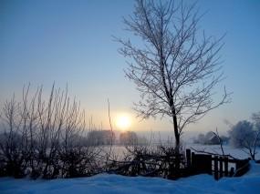 Обои Зима: Зима, Снег, Солнце, Рассвет, Дерево, Зима