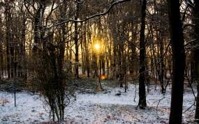 Обои Осенне-Зимний лес: , Зима