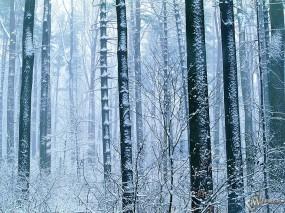 Обои Зимний лес: , Зима
