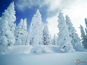 Обои Заснеженные ели: , Зима