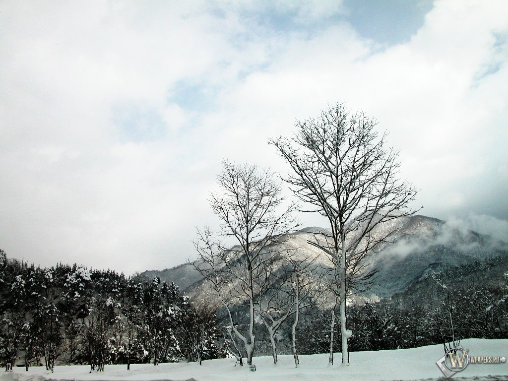 Два снежных дерева 1024x768