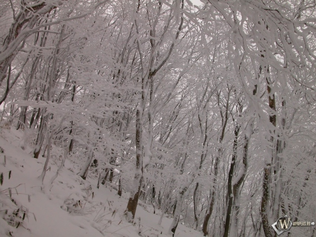 Склон с деревьями зимой