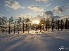 Обои Солнце за зимними деревьями: , Зима