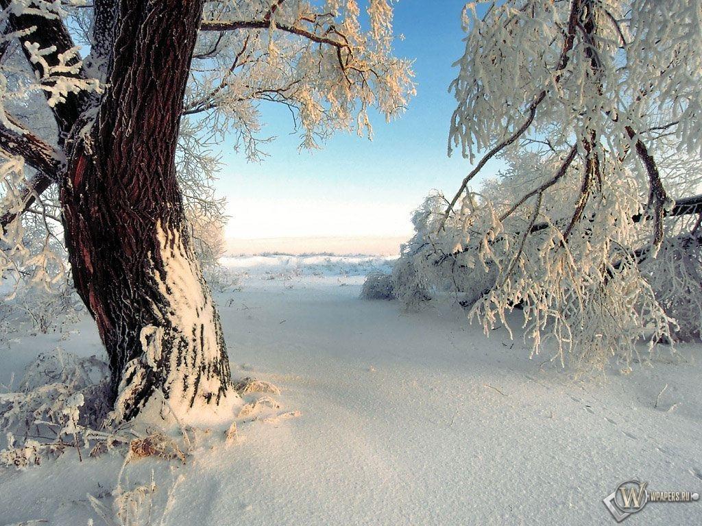 Заснеженное дерево 1024x768