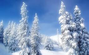 Обои Елки в снеегу: Зима, Снег, Холод, Елки, Зима