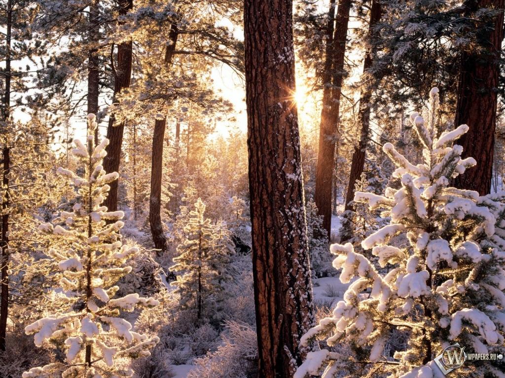 Обои зимний лес на рабочий стол с