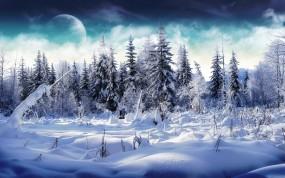 Обои Заснеженые ели: Снег, Деревья, Планета, Зима