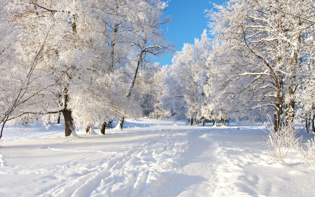 Картинки зимы поставить на рабочий стол