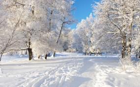 Обои Снежная тропа: Зима, Снег, Деревья, Тропа, Зима