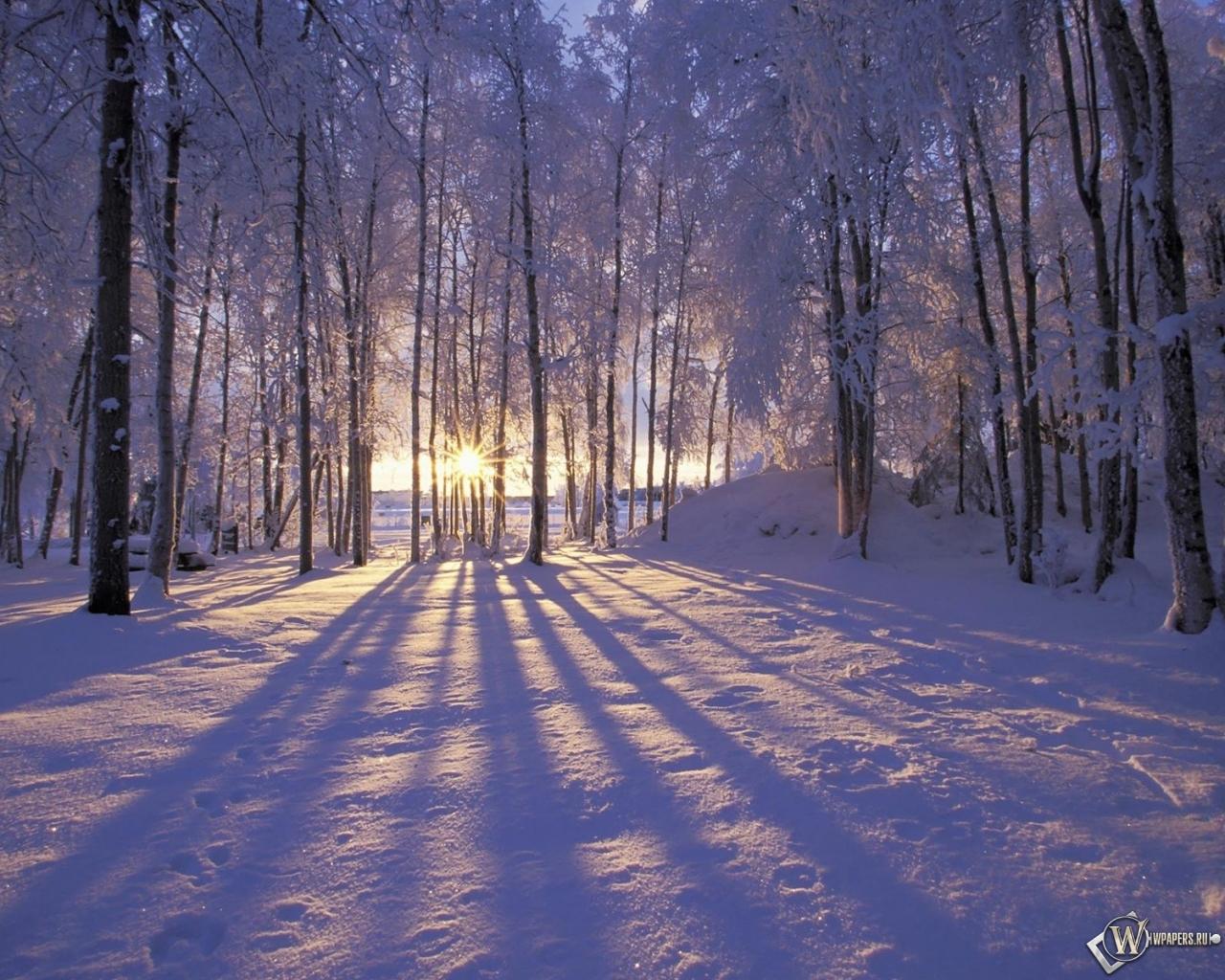 Обои солнце за деревьями зима снег