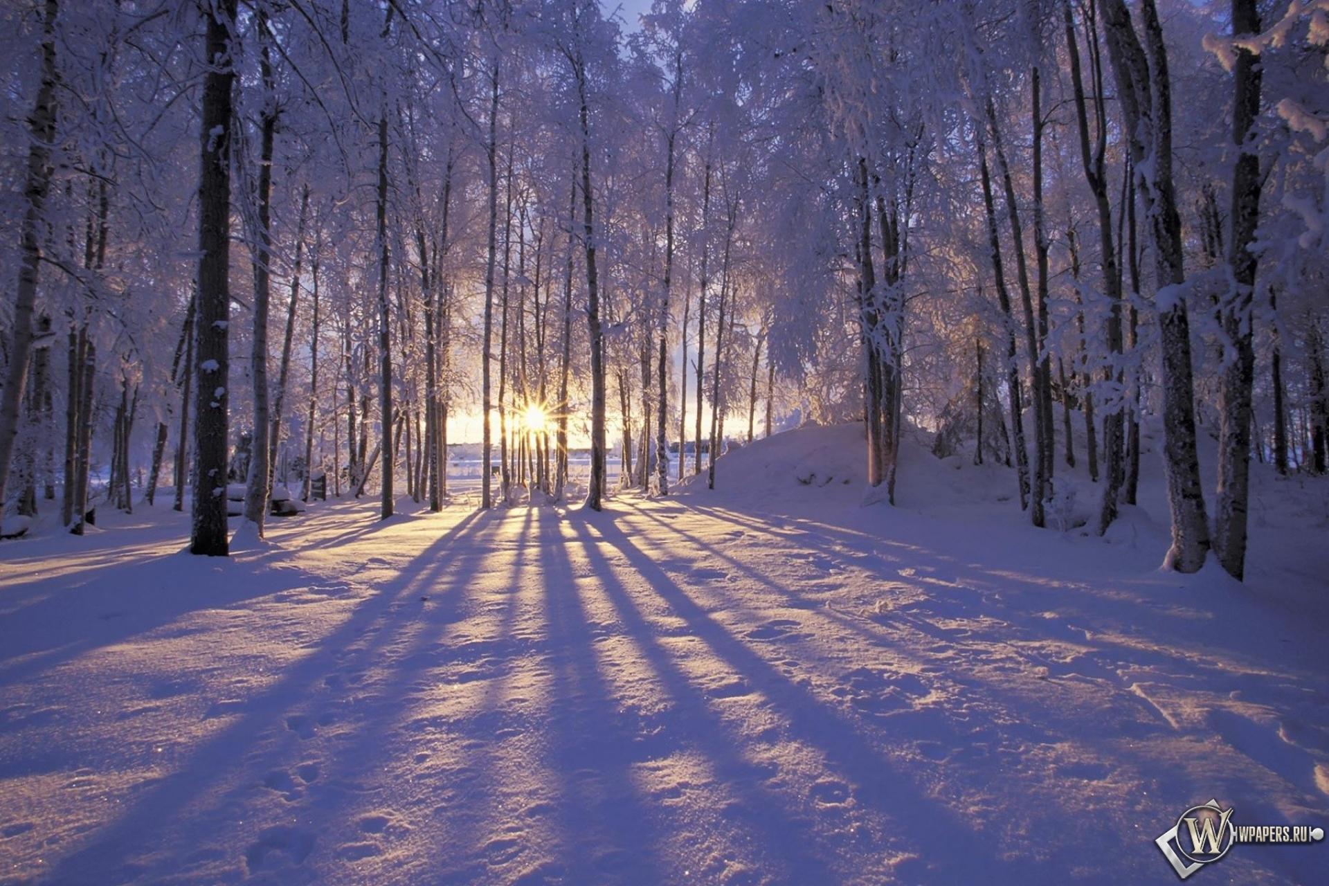 Обои солнце за деревьями на рабочий
