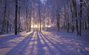 Обои Солнце за деревьями: Зима, Снег, Деревья, Солнце, Лучи, Зима
