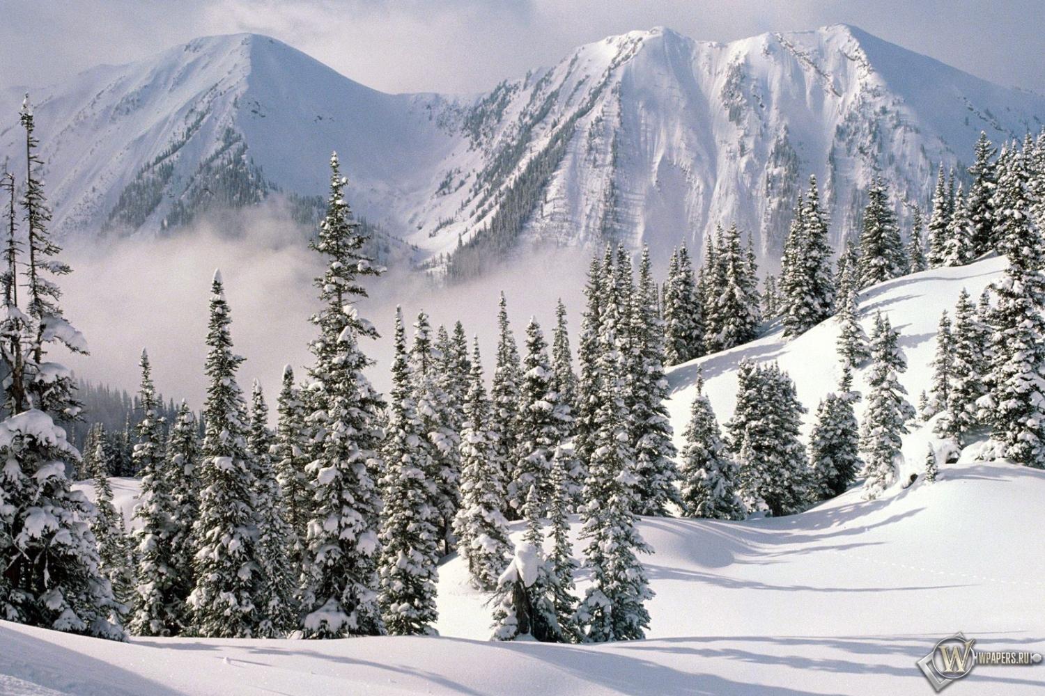 Обои снежные ели зима горы снег ели