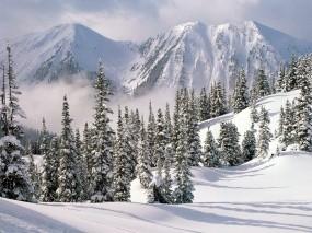 Обои Снежные ели: Зима, Горы, Снег, Ели, Зима