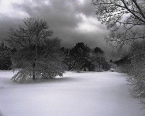 Обои Зимнее фото: Зима, Снег, Деревья, Фото природы, Ч/б, Зима