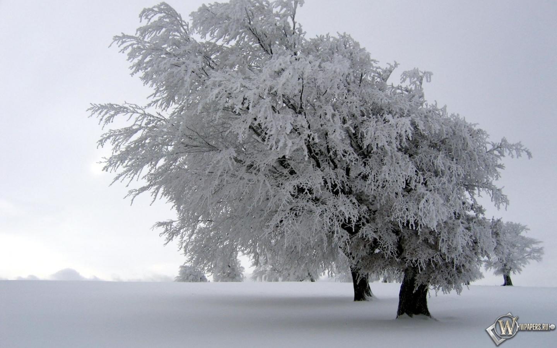 Обои снег на дереве зима снег дерево