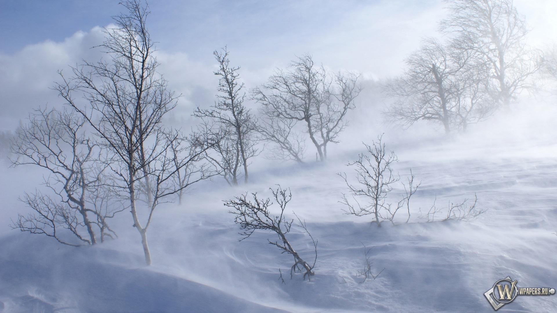 Ветренный зимний день 1920x1080