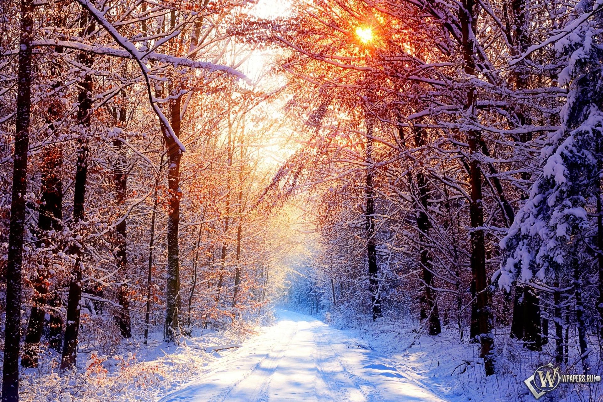 Зима солнце фото