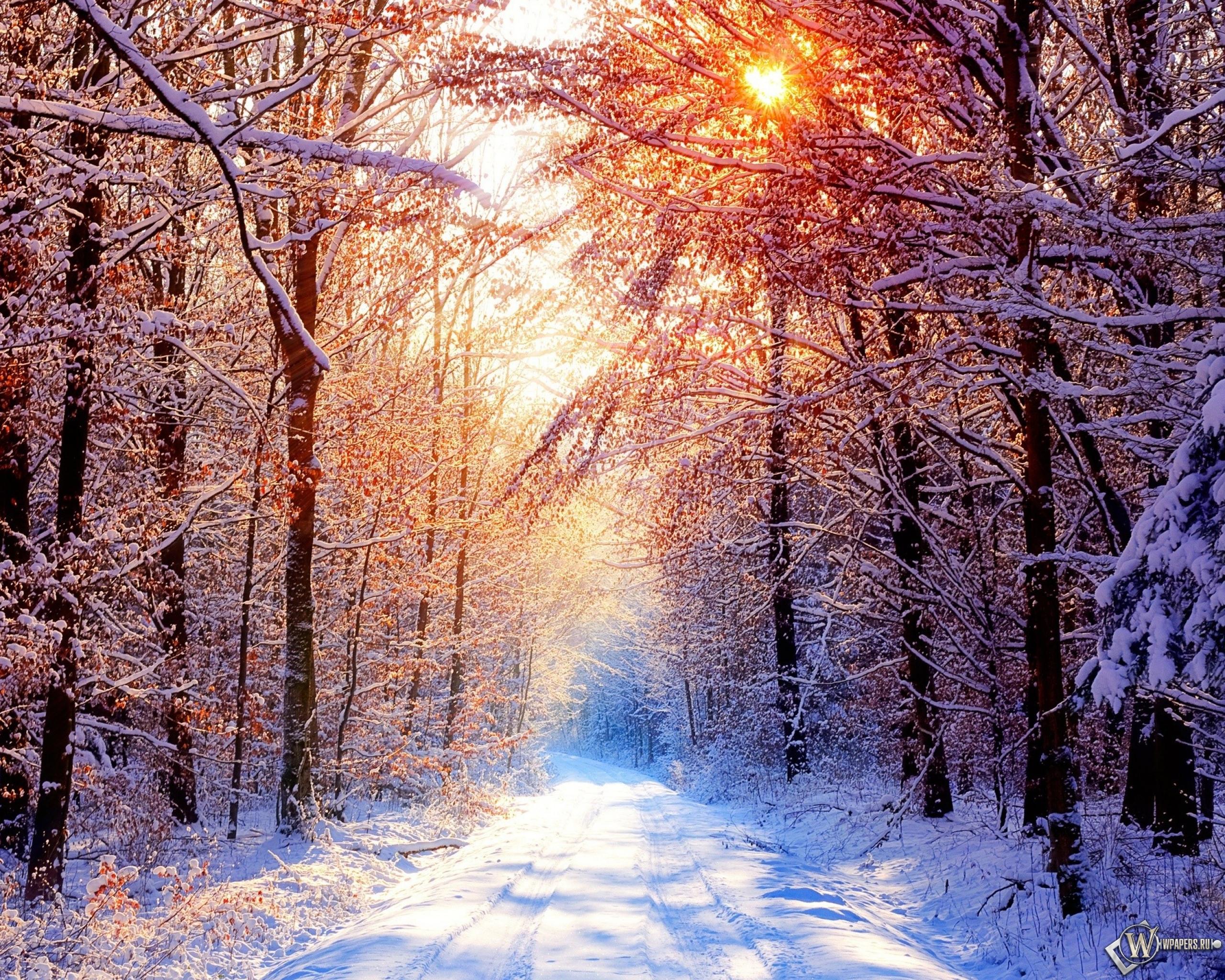 Зима снег лес деревья солнце 2560x2048