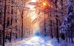 Обои Глубокое молчание: Зима, Снег, Лес, Деревья, Солнце, Зима