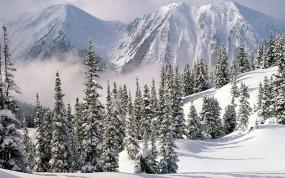 Обои Сход лавины: Снег, Лес, Лавина, Зима
