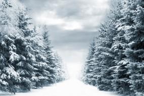 Обои Зимняя аллея: Фонари, Снег, Тучи, Аллея, Небо, Елки, Зима