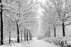 Обои Снежная аллея: Фонари, Снег, Деревья, Аллея, Небо, Зима