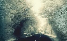 Обои Зимняя дорога: Снег, Дорога, Деревья, Кусты, Полосы, Столбы, Зима