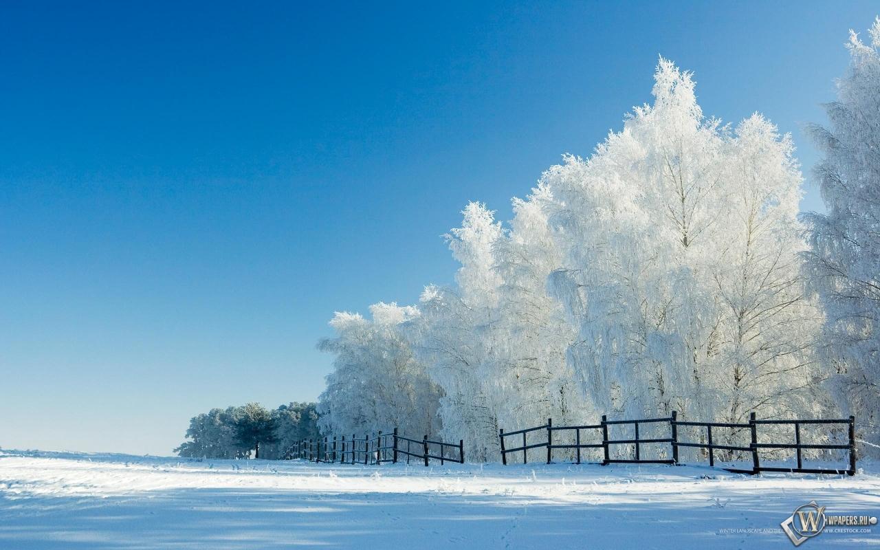 Лес снег лес деревья поле утро 1280x800