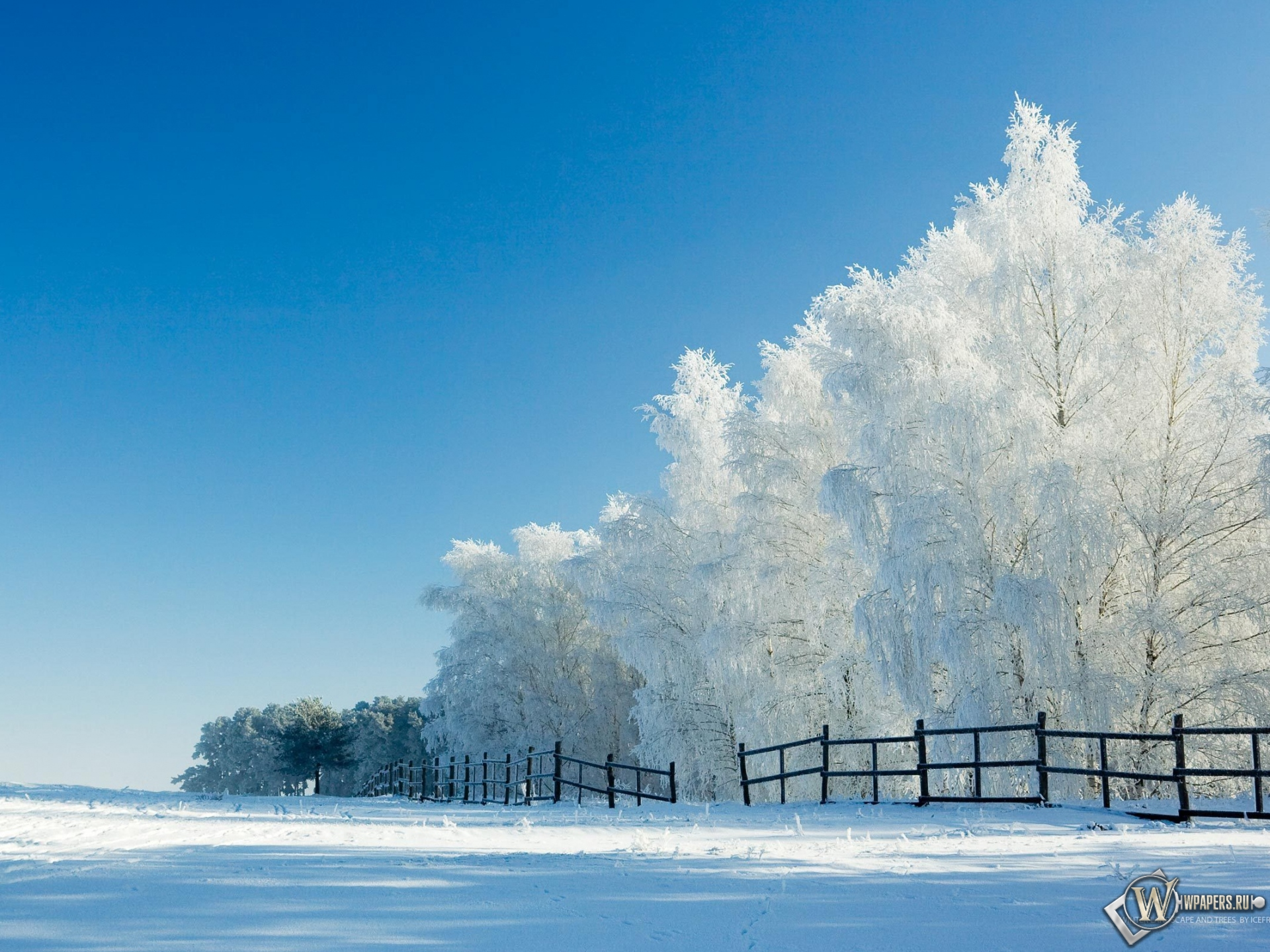 Деревья поле утро 1920x1440 картинки