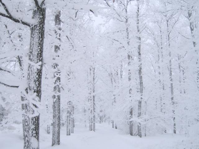 Белоснежный лес