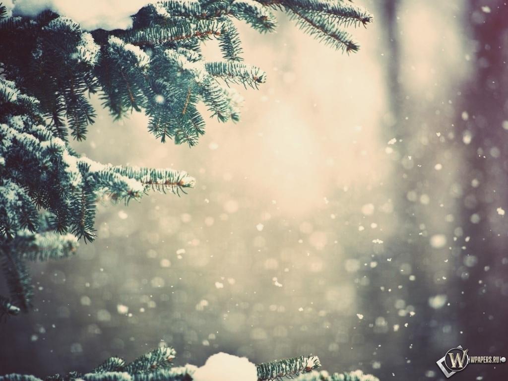 Зимний лес 1024x768