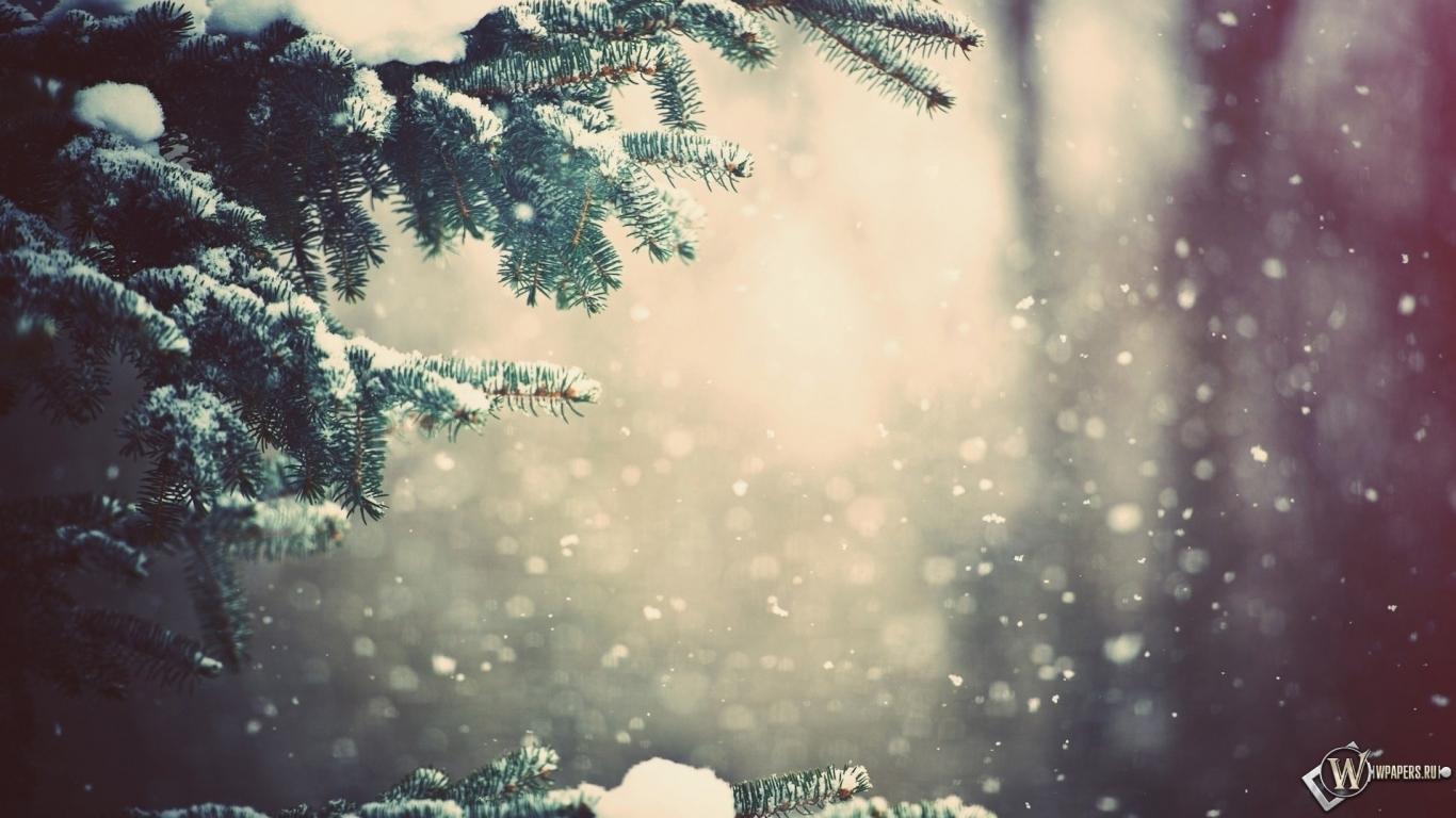Зимний лес 1366x768